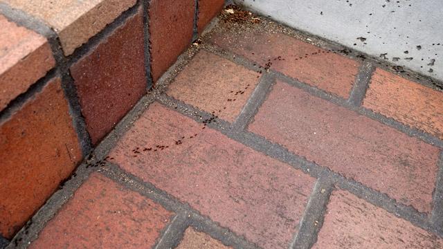 「珍しいアリが列をなしています」。そしてアリについていこうとしていた