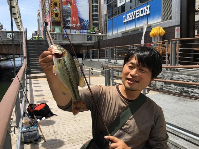 ブラックバスだ!ありふれた魚だけど、こんなところで出会うとなんだか不思議。