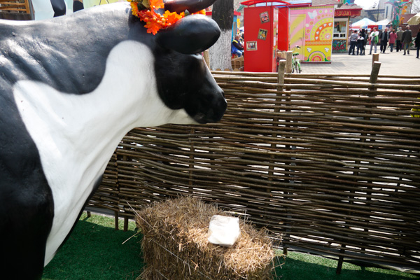 牛、遠くを見ている