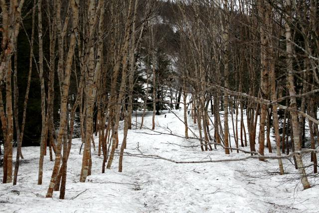 登山道は当然のように雪に覆われており、まだ冬山といった感じである