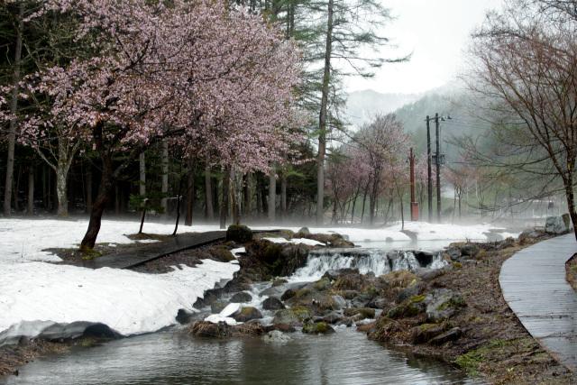 まずは山野草エリアへ――ほぉ、桜に渓流と実に風流じゃないか