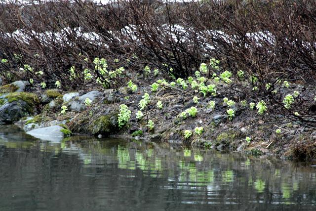 特に水辺には、気持ち悪いくらいに茂っていた