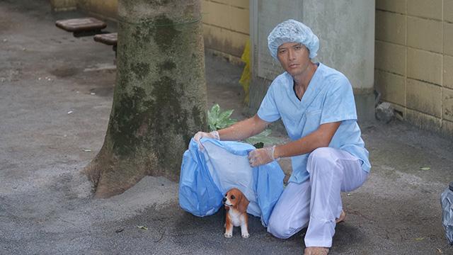 手術用の医者が雨に濡れた子犬に衛生的な衣類をかぶせる
