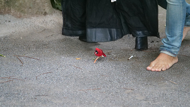 子犬が小鳥だった場合はどうなのだろうか。かよわい動物という点では同じである