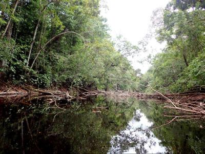 日本とは比較にならない密度で危険が潜む、アマゾンの熱帯雨林。