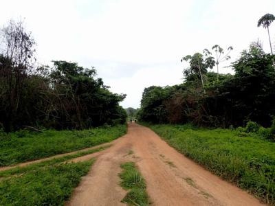 村の傍を通る赤土の道。そこを彼らは横切っていた。