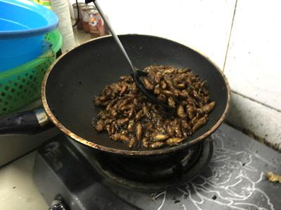 バンコク郊外の養魚場でセミのナンプラー炒めをふるまってもらったの。ちなみにセミはタイ語で「チャカチャン(ジャカジャン)」というらしい。かわいい響きだ。