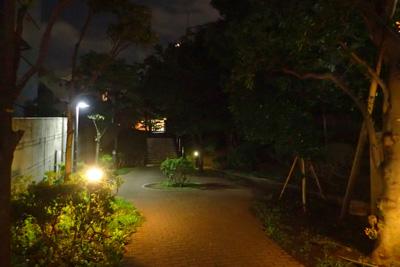 セミの幼虫を求め、夏の夜の緑道へ。