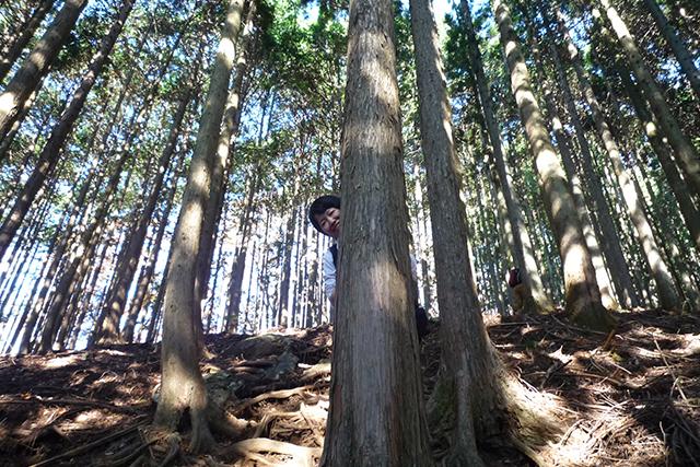 ひたすら杉ですよ。
