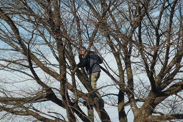 関係ないけど後ろの木に登っていたオールドボーイ。危ないよ!