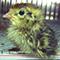 スーパーのうずら卵から、ひな鳥ピヨピヨ!(デジタルリマスター版)
