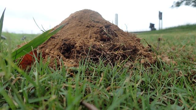 掘り起こした土が富士山の様に積まれていく。もうこれ以上掘り進める事は出来ないのか。