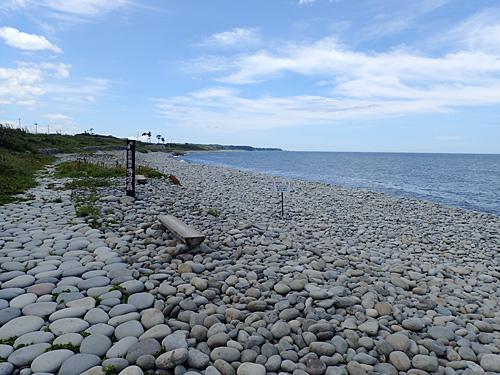 これが鳴り石の浜だそうです。