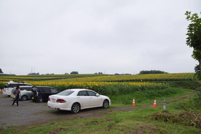 軽自動車のナンバープレート以外の黄色い画素は全部ひまわりです。