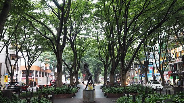 並木道が多いのも仙台の特徴かも。道が開けていて美しい。