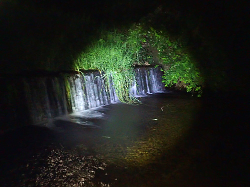 オオサンショウウオを観察した堰は、オオサンショウウオを通せんぼする堰でもある。