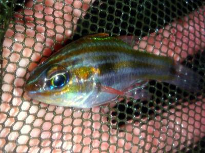 夜の漁港は小魚のパラダイス。言いかえれば大物のエサが豊富ということだ。