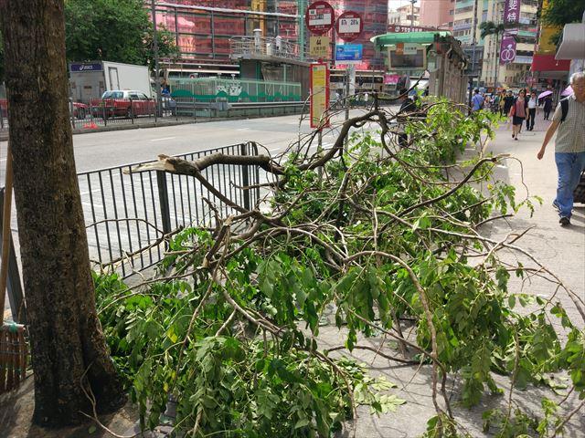 で、翌日はカラリと晴れてうだる暑さ…どっちもイヤだ。 ご覧の通り、街路樹がえらいことになっていました。