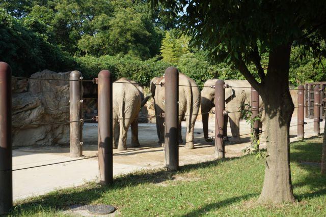 はい、ゾウです。