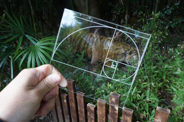 トラ。黄金のしま模様を持つ動物なだけはある。