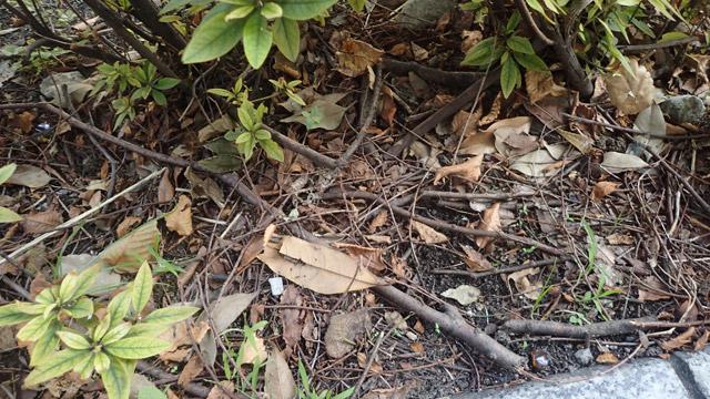 枝の落ちている場所には蚊が多く発生していることもよくわかった