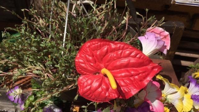 本来は夏に華やかな色の花を咲かせるらしい