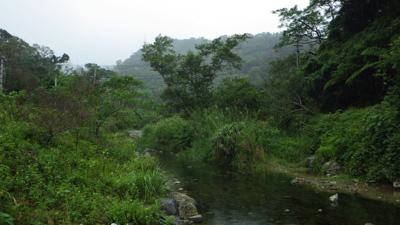 河口付近、潮の影響を受けるエリアですでに清流のような雰囲気。沖縄北部の川は傾斜が急で短いのでこのように本土の常識では考えられないような景観になる。