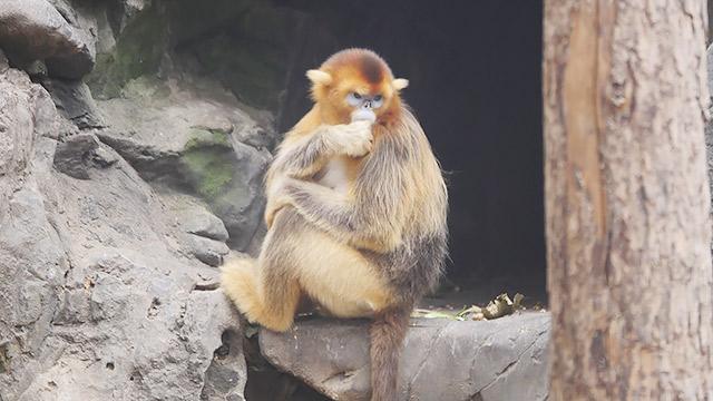 北京動物園を、