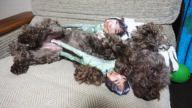 活用法9:大好きな犬につかまらせて自分の欲求を満たす