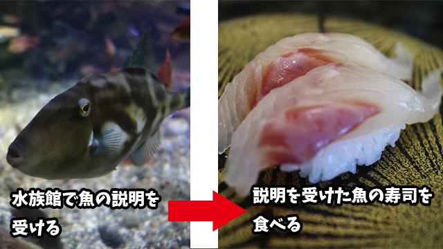 今回は水族館に行った後に寿司を食べる企画