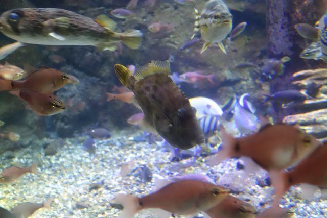 今日、同族が食べられるとは知らずにのんきに泳いでいる魚たち