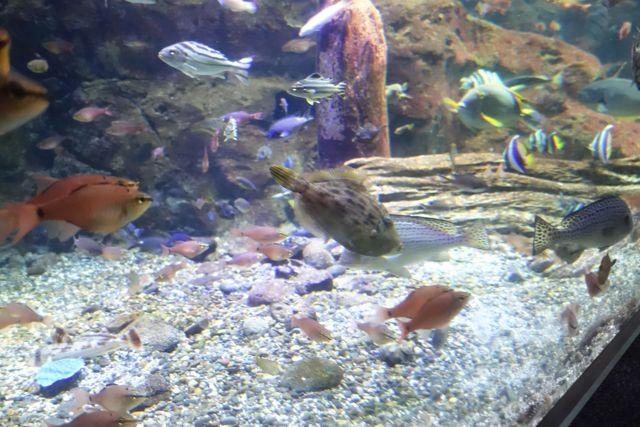 さっきまで水族館で見ていた魚を…