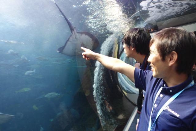 「あそこで泳いでいるアジはよく泳いでいて脂ものっているので絶対美味しいですよ」と飼育員っぽくない発言をする岩崎さん。なかなか他の水族館にはいないタイプの人だろうなぁ…おもしろい…!