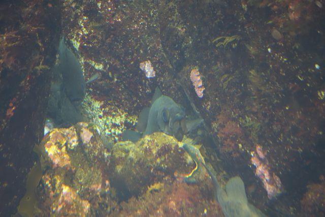 岩礁に住んでいる魚を「根魚」ともいう