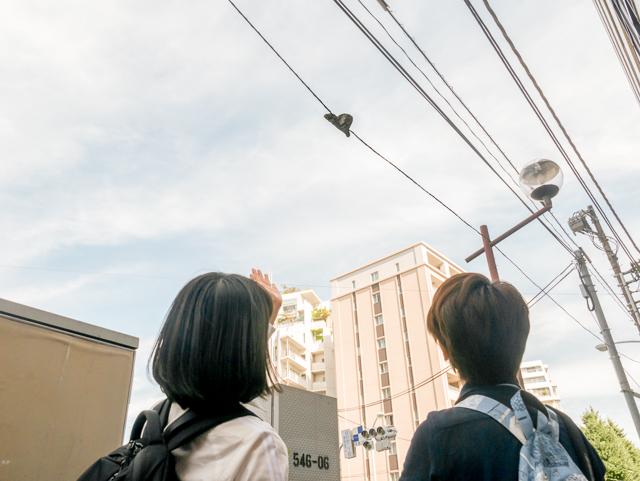 「この斜めの切り口に、電線に触れないように慎重に切った様子がうかがえますよね」と石山さん。たしかに。丁寧な仕事というべきか。