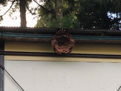 数十メートルしか離れていないお隣さんの畑にも、つい先月に退治されたというスズメバチの巣が残っていた。このあたりはかなりスズメバチ密度が高いのだそうだ。