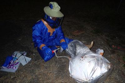 ハチを静めるため、ゴミ袋の中で煙をたいて灯油ポンプで巣を詰めた袋へと送り込む。