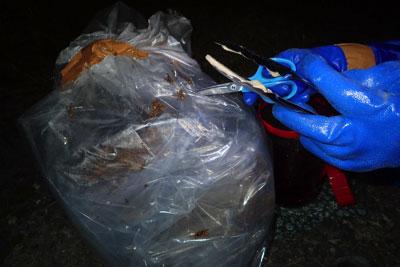 ある程度おとなしくなったところで袋に小さな切り込みを入れ、トングで1匹ずつつまみ出して酒に放り込む。…この作業が長い長い。