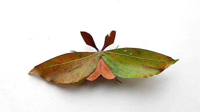 こういう蛾がいるだろう。だから作ってみました。