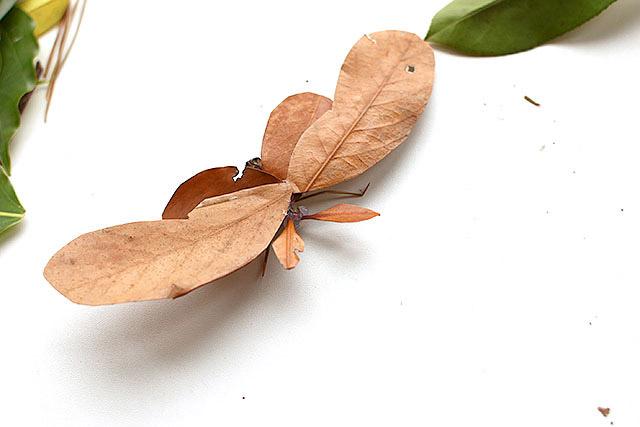 枯れ葉とは思えない生命感でしょう。