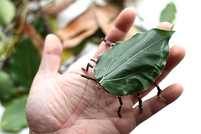 昆虫の定義から外れそうなフォルムですが、昆虫のつもりです。