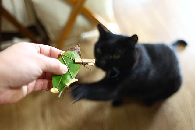 黒猫のなつめさんは、僕の工作を邪魔するのが大好きです。爪が出てますよ!