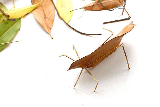 葉っぱに足を付けただけで結構虫っぽい。