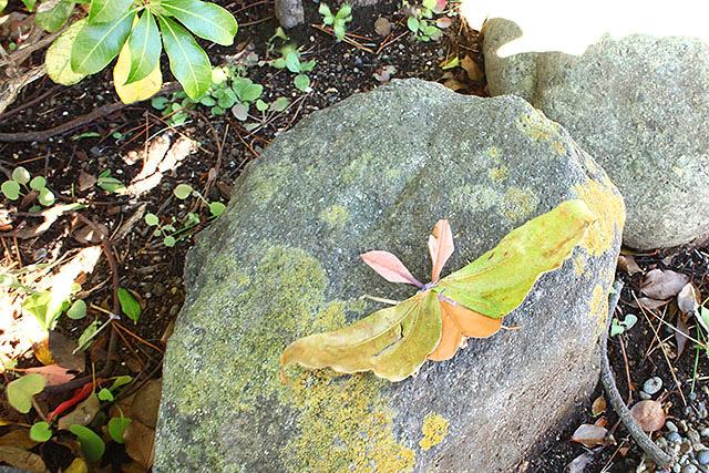 蛾っちゃんを石の上に置くと、とても良い。