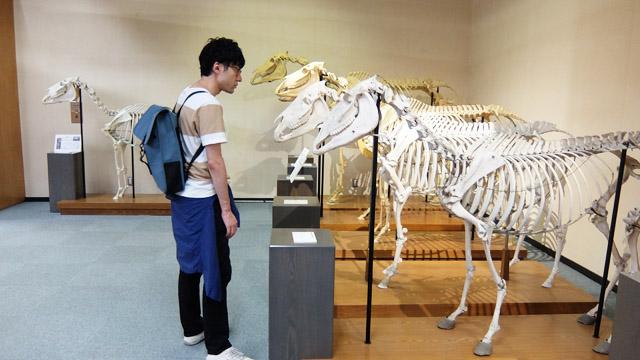 馬の骨とひたすら向き合う記事です