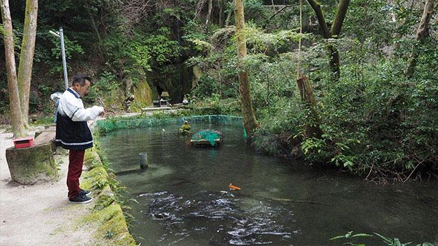 横には鯉たちがいる池と、その奥に小さな滝もある。