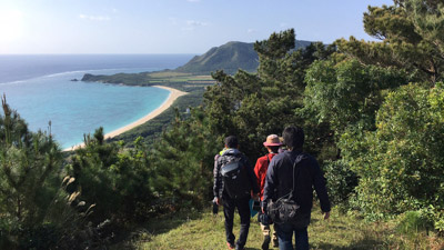 クワガタのいるススキ原があるのは石垣島と西表島。今回は石垣島で観察に挑戦。
