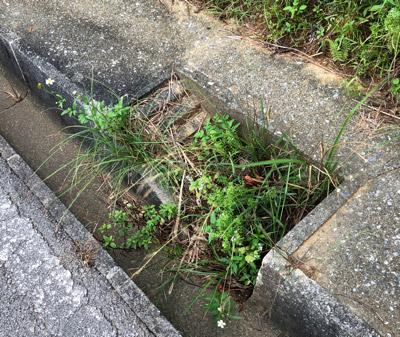石垣島の林道にはこういう小さな階段が備えられた側溝がしばしば見られる。