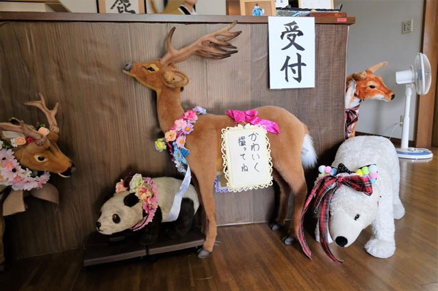 受付に鹿がいるのは「かわいいから」
