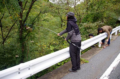 茸本さんとその友達のキノコ狩りに同行させてもらった。これは途中でのアケビ採り。食べられるものがあれば何でも採る愉快な方々。